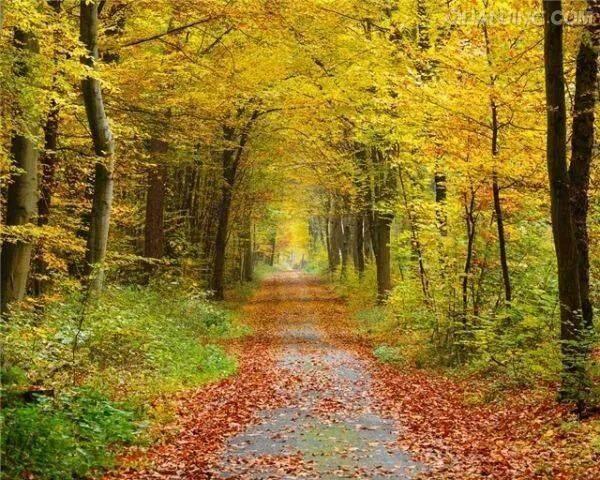 散文:秋日的树林