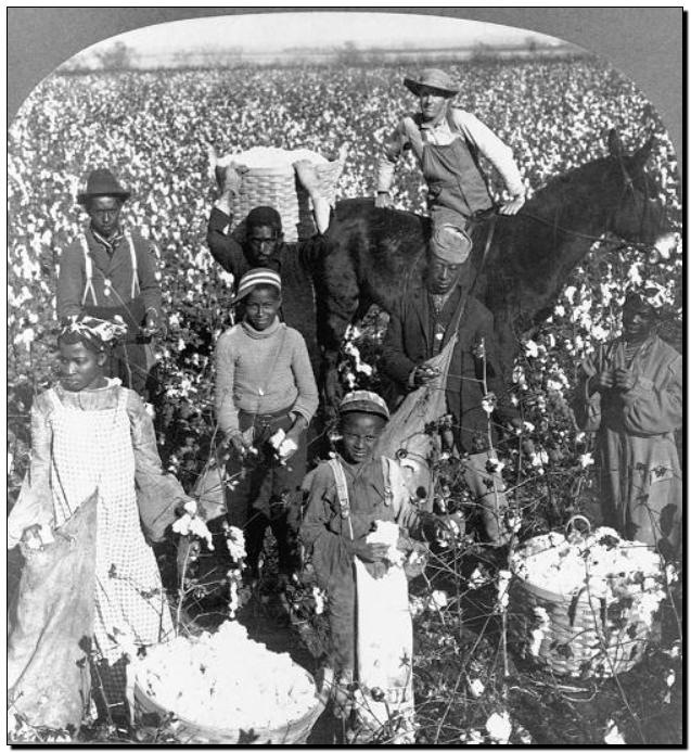 禁用新疆棉花,干涩中国内政,HM、优衣库、ZARA、耐克、阿迪达斯等引公愤4