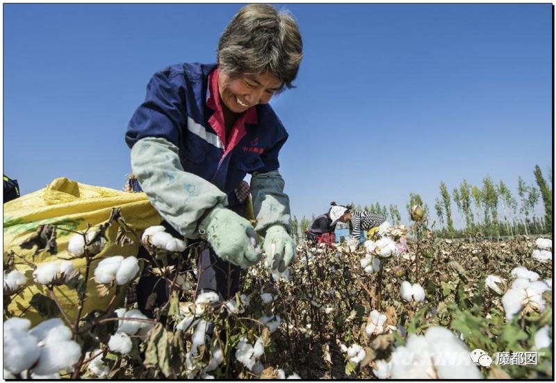 禁用新疆棉花,干涩中国内政,HM、优衣库、ZARA、耐克、阿迪达斯等引公愤7
