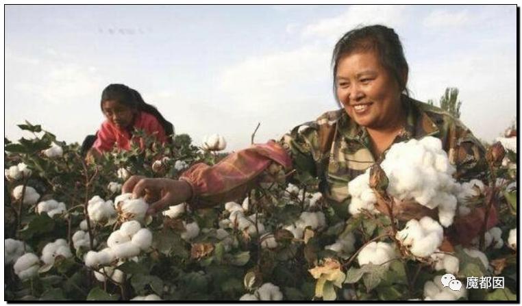 禁用新疆棉花,干涩中国内政,HM、优衣库、ZARA、耐克、阿迪达斯等引公愤8
