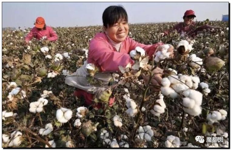 禁用新疆棉花,干涩中国内政,HM、优衣库、ZARA、耐克、阿迪达斯等引公愤6