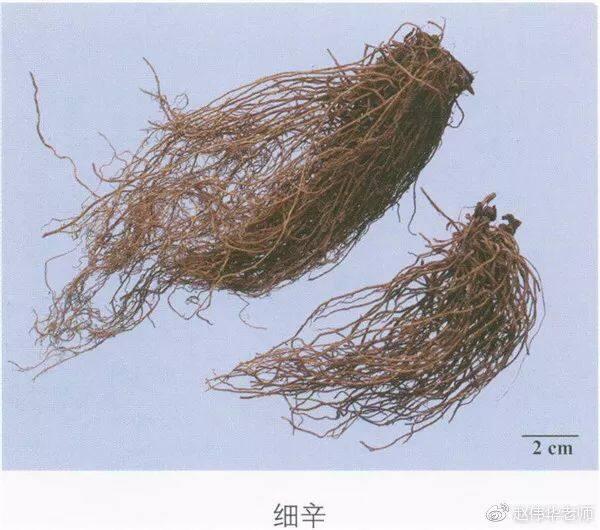 看图识中药,中草药材图片名称大全,中药材材市场价格实拍图片(图3)