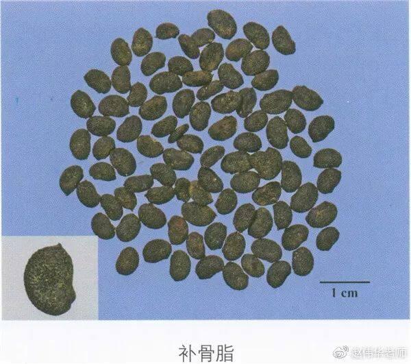 看图识中药,中草药材图片名称大全,中药材材市场价格实拍图片(图125)