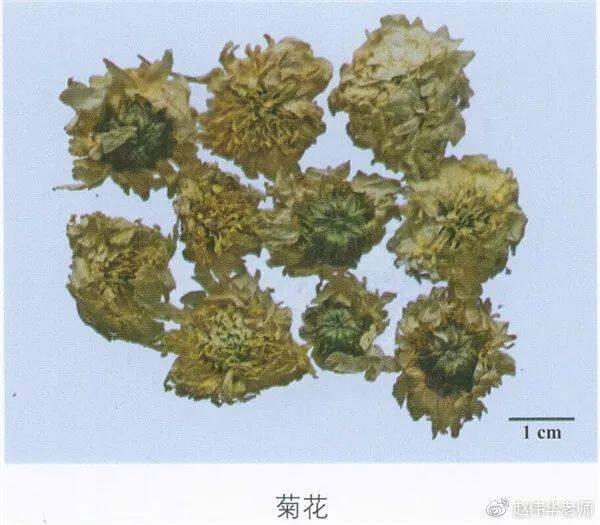 看图识中药,中草药材图片名称大全,中药材材市场价格实拍图片(图113)