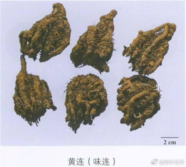 看图识中药,中草药材图片名称大全,中药材材市场价格实拍图片(图18)