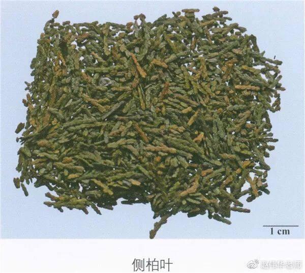 看图识中药,中草药材图片名称大全,中药材材市场价格实拍图片(图99)